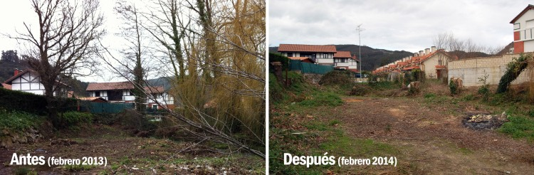 arboles samano antes y despues 1 copy